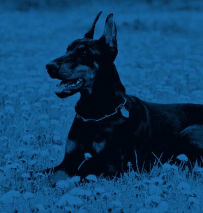 certificado-animales-potencialmente-peligrosos-alzimedic